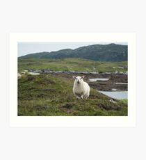 The prettiest sheep Art Print