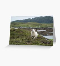 The prettiest sheep Greeting Card