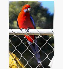 bird on a wire. tidal river - the prom  Poster