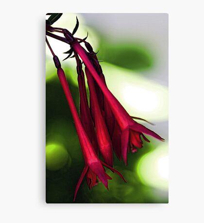 Honeysuckle - Arnold Red Canvas Print