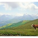 Austrian cow in the Alpes - Full colour by Anouk Westerdijk