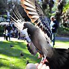 Flash of wings by Karen01