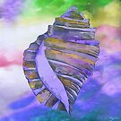 NAUTILUS CONCH SEA SHELL by Saundra Myles