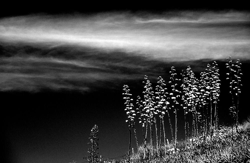 Hillside Flowers by Chris Whitney