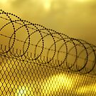 Razor Wire by farmboy