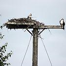 Nesting by Lynn  Gibbons