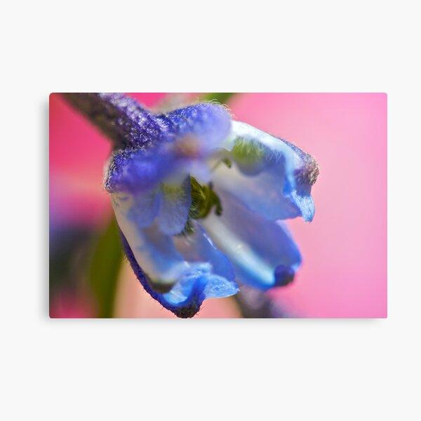 Blue Flower Closer Metal Print
