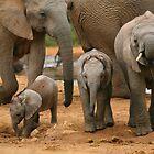 Baby African Elephants von naturalnomad