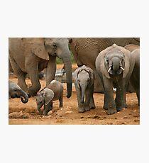 Baby African Elephants Photographic Print