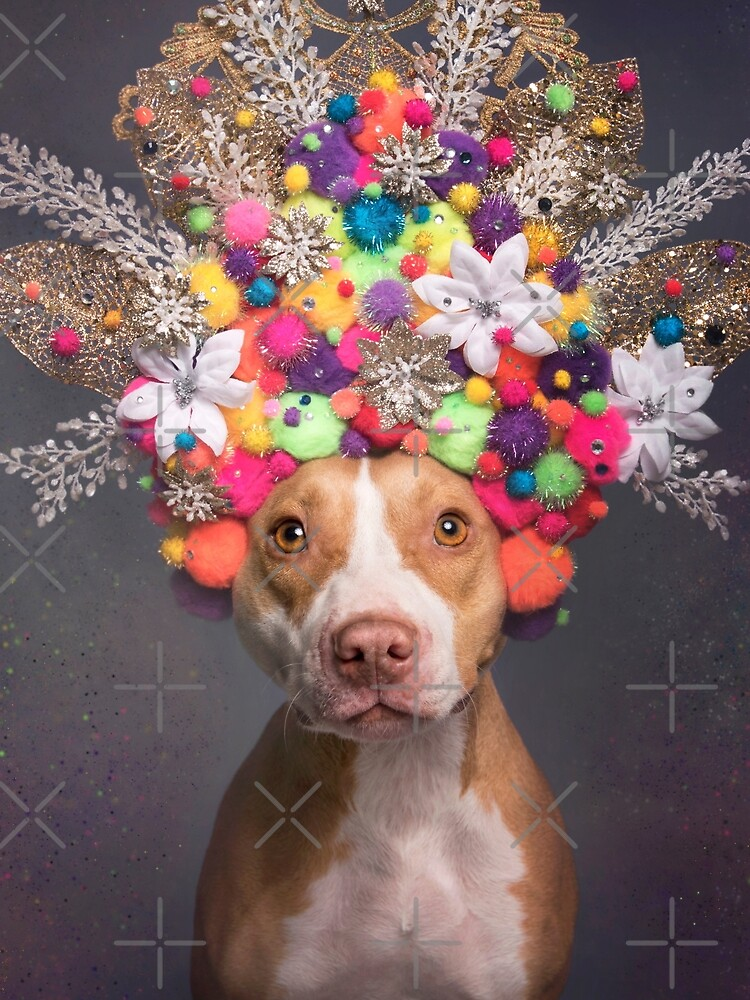 Pit Bull Flower Power, Frida by SophieGamand