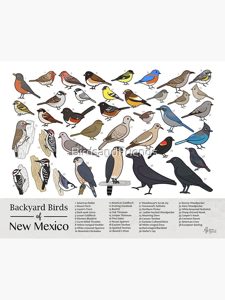 New Mexico - Backyard Birds of New Mexico Field Guide Print - Bird Art Print - BirdsandFriends.co by BirdsandFriends