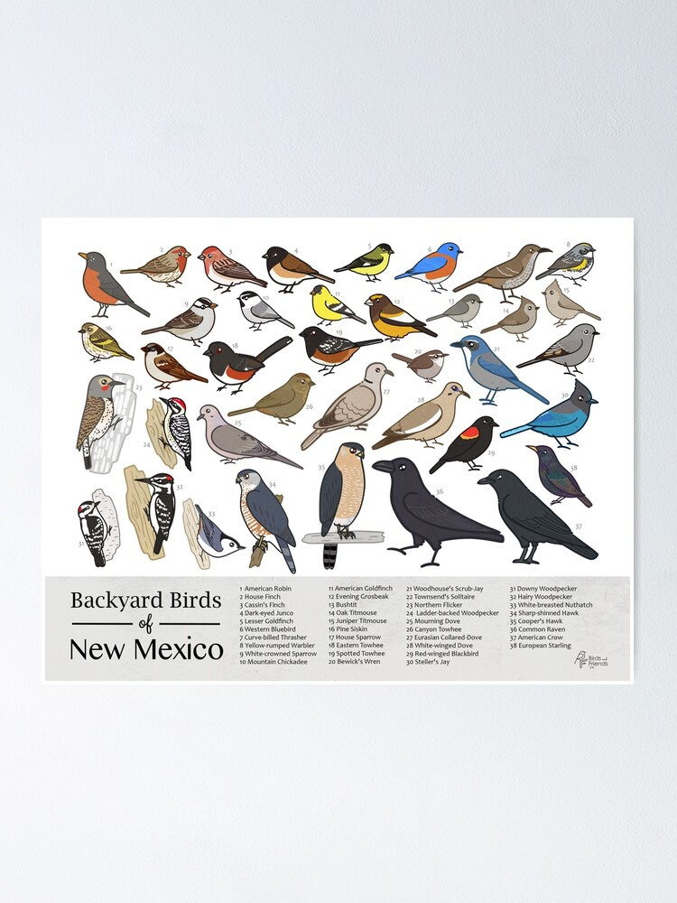 Alternate view of New Mexico - Backyard Birds of New Mexico Field Guide Print - Bird Art Print - BirdsandFriends.co Poster