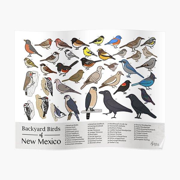 New Mexico - Backyard Birds of New Mexico Field Guide Print - Bird Art Print - BirdsandFriends.co Poster