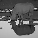 Black Rhino Reflection by naturalnomad