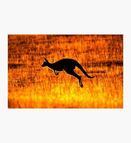 Kangaroo Sunset Photographic Print
