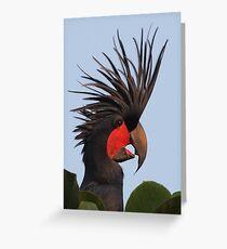 Bad Hair Day - Palm Cockatoo Greeting Card