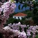 Skopelos II by photoloi