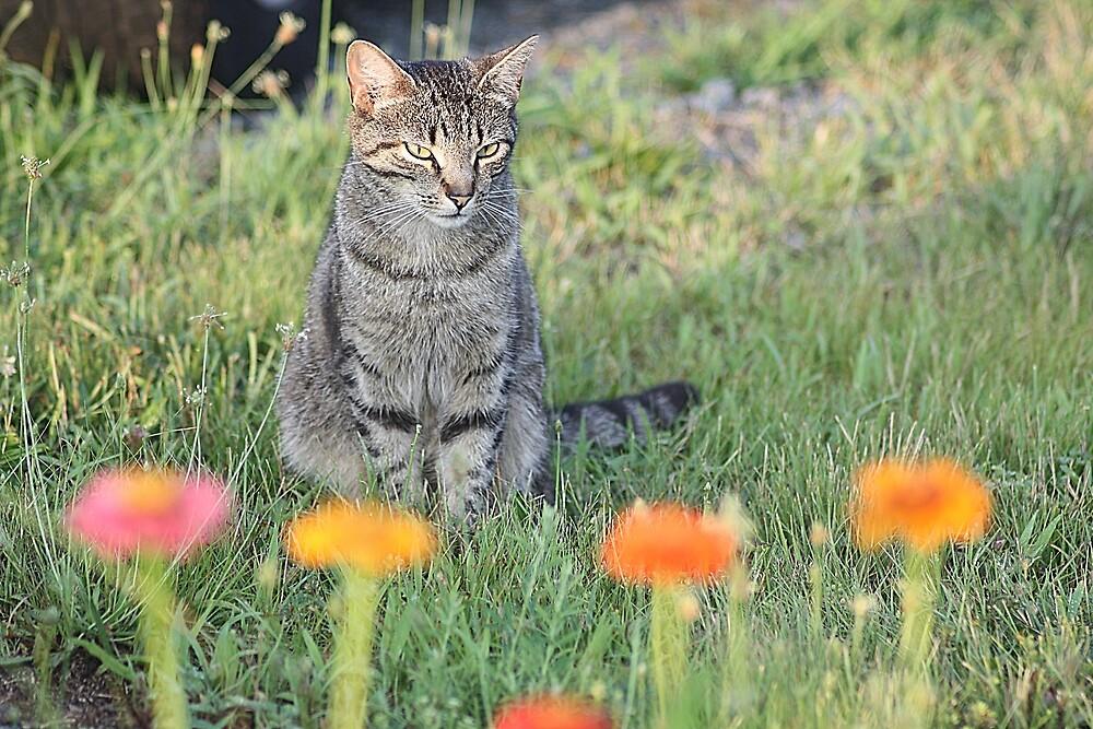 Watching Me! (Feline) by rasnidreamer