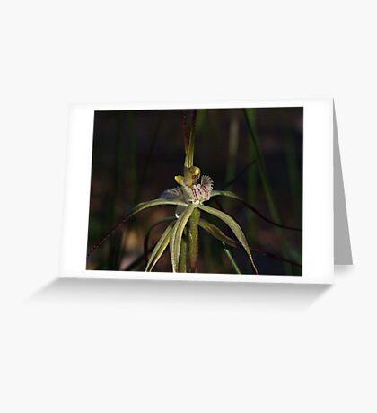 Spider Orchid (Calandenia xantha) Greeting Card