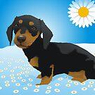 Daisy dachshund by Matt Mawson