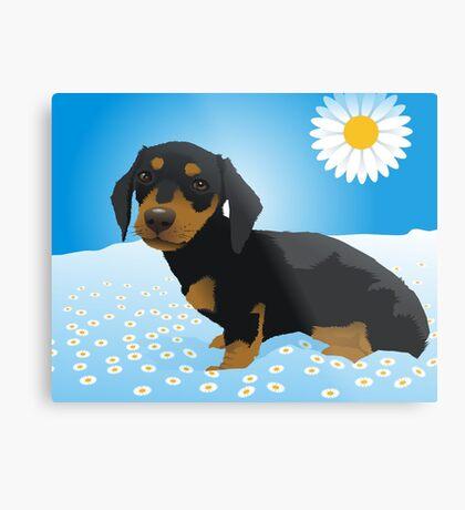 Daisy dachshund Metal Print