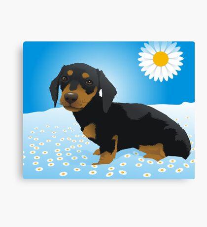 Daisy dachshund Canvas Print