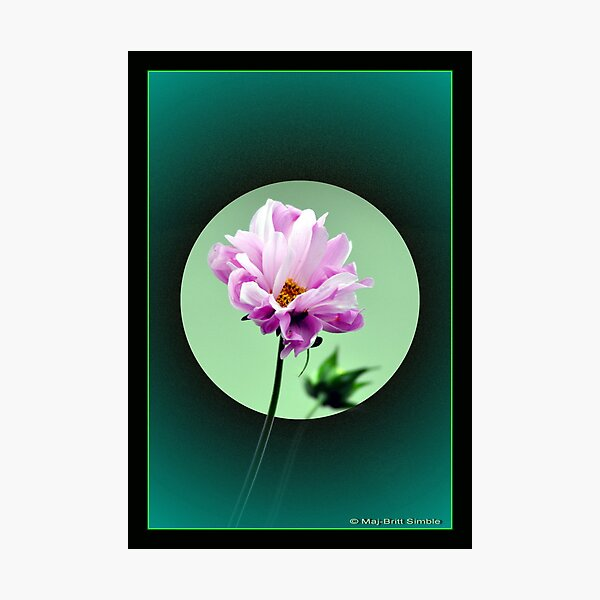 """Summer Flower"" Photographic Print"