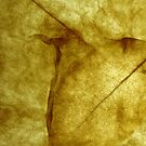 Dry Leaf by MsSLeboeuf