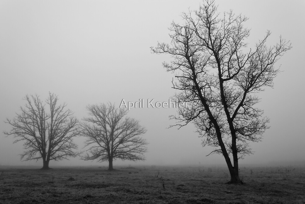 Three Trees in the Fog by April Koehler