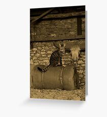 Take me with you! Greeting Card