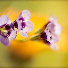 summer flower by jrenner