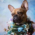 The Frenchie Collection | Roscoe by Peggy Colclough