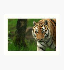 Amur Tiger Art Print