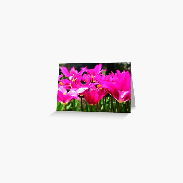 Pink wide open Greeting Card