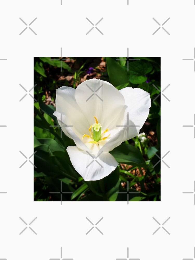 White Tulip by debfaraday