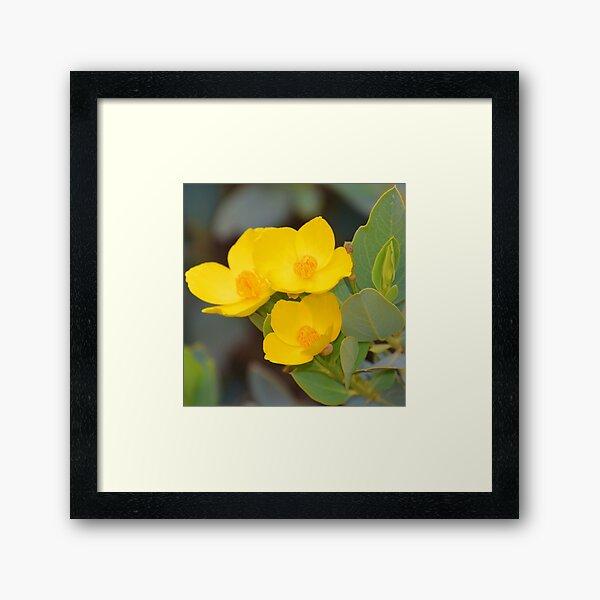 Vibrant Yellow Times Three Framed Art Print