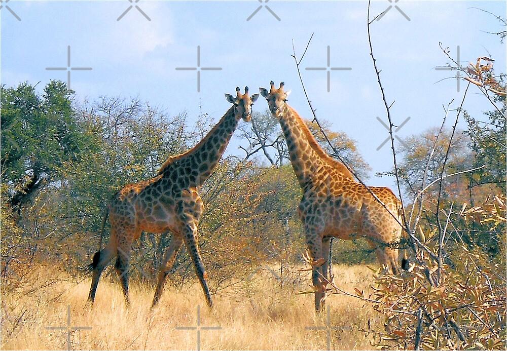 WHEN TWO FRIENDS MEET - the giraffe by Magriet Meintjes