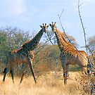 WHEN TWO FRIENDS MEET - the giraffe by Magriet Meintjes