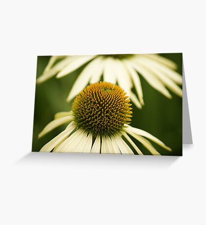 ~ Daisy, Daisy, Give Me Your Answer True ~ Greeting Card