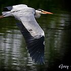 Grey Heron by snapdecisions