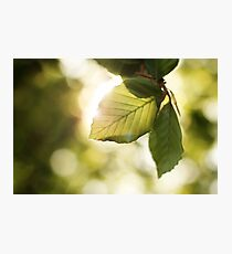 Spring's Gift Photographic Print