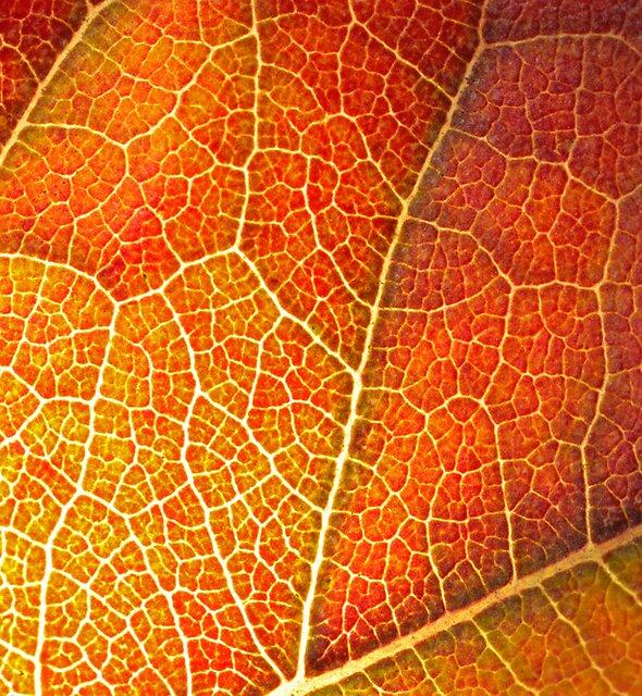 Autumn Leaf by Etwin