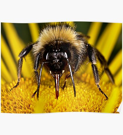 Bee face to face Poster