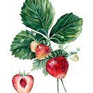 Erdbeerbotanische Kunst von AnnaShell