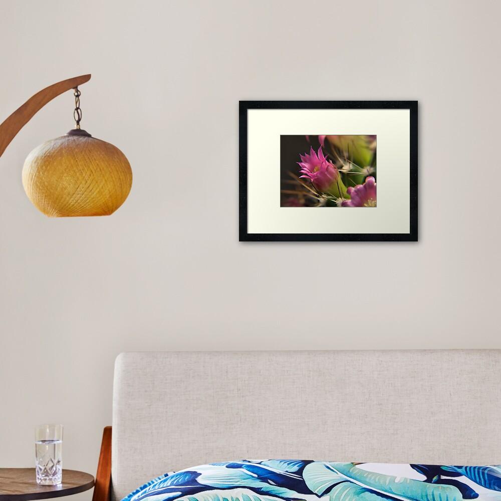Cacti Flower Closeup #1 Framed Art Print
