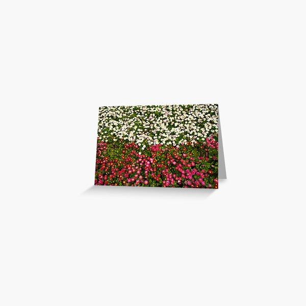 Polish Flag Flowers Greeting Card