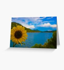 A Sunflower for Mo Greeting Card