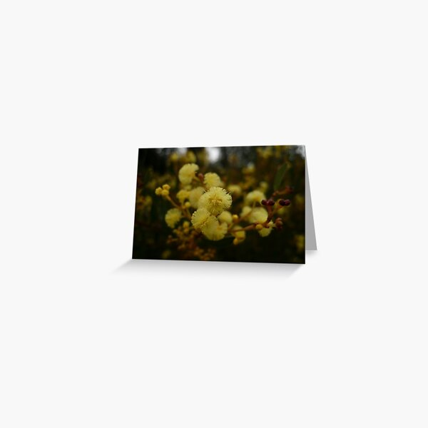 Best Dressed Wattle Blossom in Town Greeting Card
