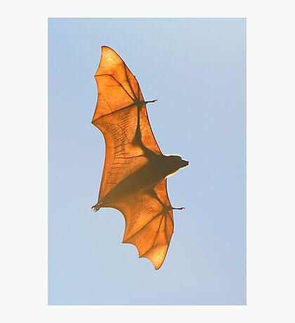 X-ray Fruit Bat Photographic Print