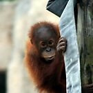 Baby Orangutan by Terence Russell